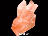 BIRD 07