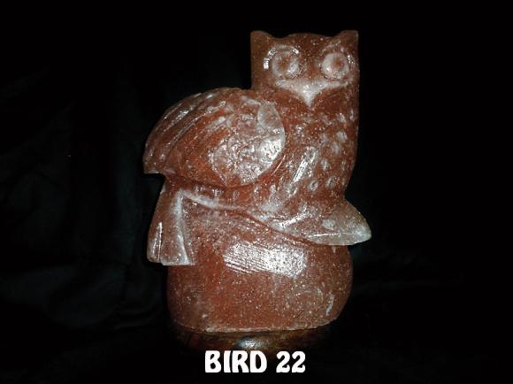 BIRD 22