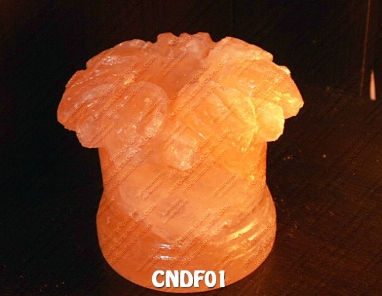 CNDF01