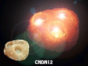 CNDN12