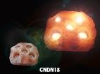 CNDN18