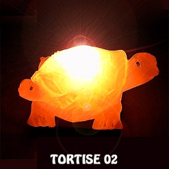 TORTISE 02
